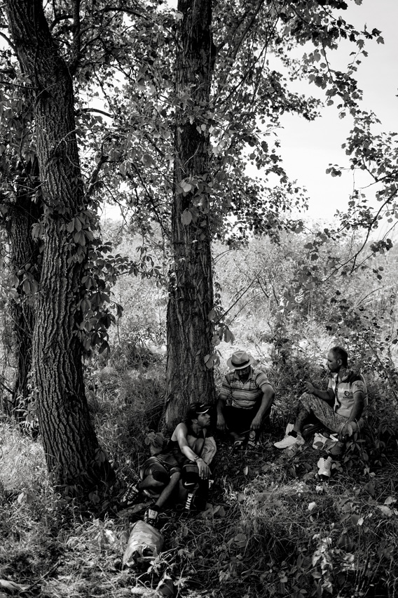 Refugees rest in the shade of trees close to the Horgos-Röszke border crossing until they find an opportunity to get to an open border.