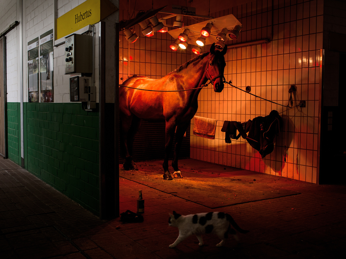 2014. A horse is taking a solarium session at the training site German Olympic Horse riding committee in Warendorf while a cat passes by.