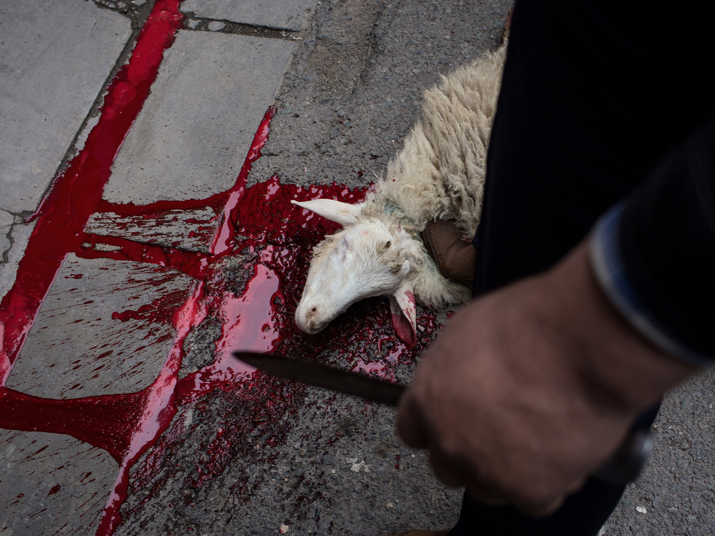 A sheep is sacrificed in honour of Alireza Akbari as his corpse is carried through the Fallah neighbourhood of Tehran on Thursday April 18th, 2019 in celebration and mourning of his martyrdom. Alireza Akbari died in Syria four years earlier serving the Fatemioun brigade, a military unit connected to the Islamic Revolutionary Guards in which Afghan citizens serve. Many of its members are refugees residing in Iran.